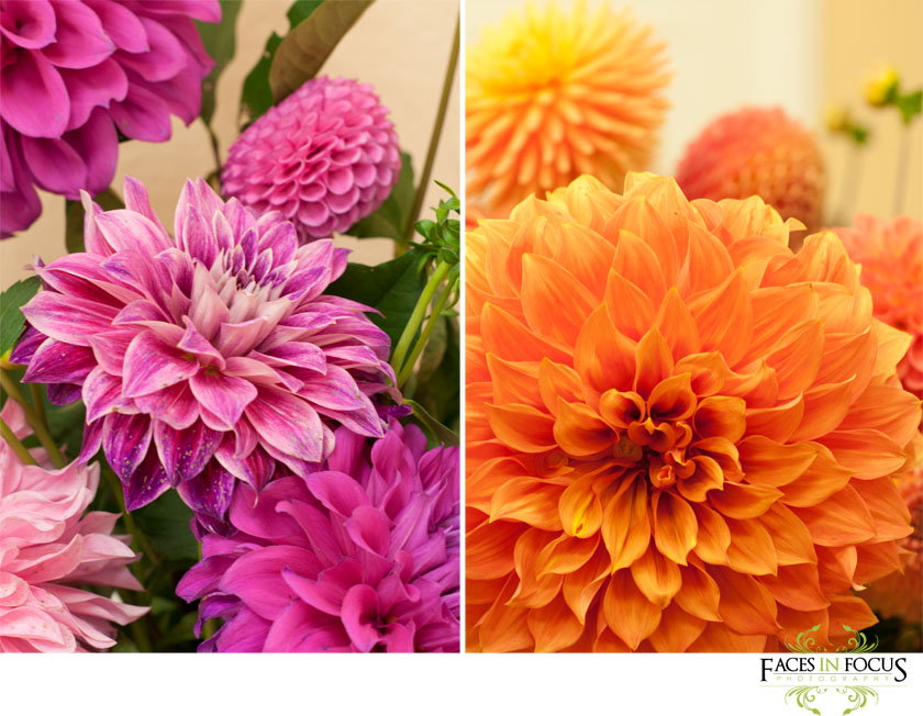 Pink and Orange Dahlias decorated the ceremony & venue.
