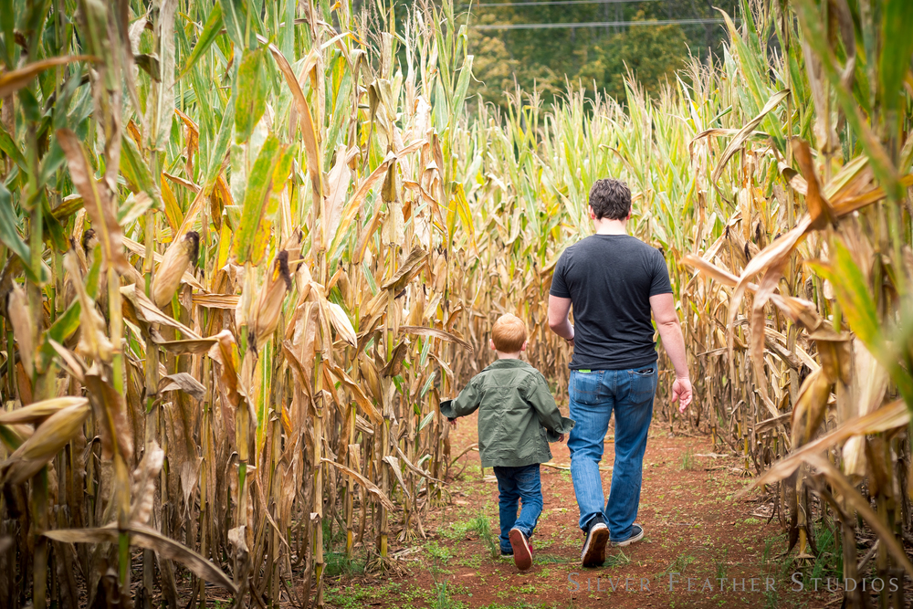 autumn fun in a corn maze in north carolina. © silver feather studios