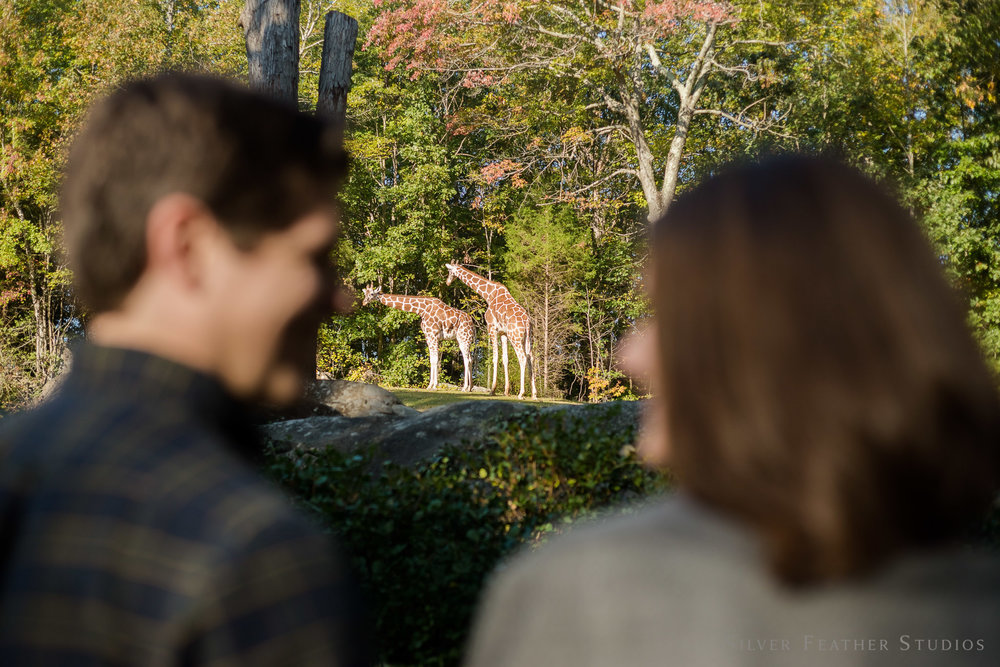 nc-asheboro-zoo-engagement-006.jpg