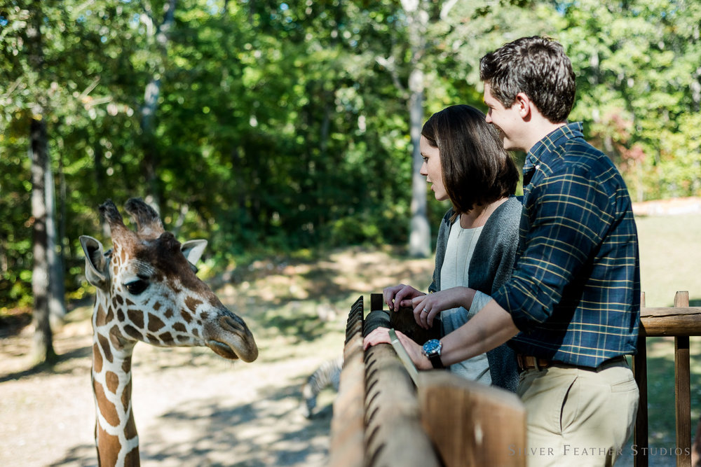 nc-asheboro-zoo-engagement-018.jpg