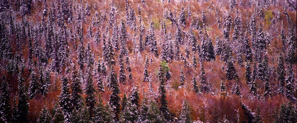 Boreal Forest Autumn