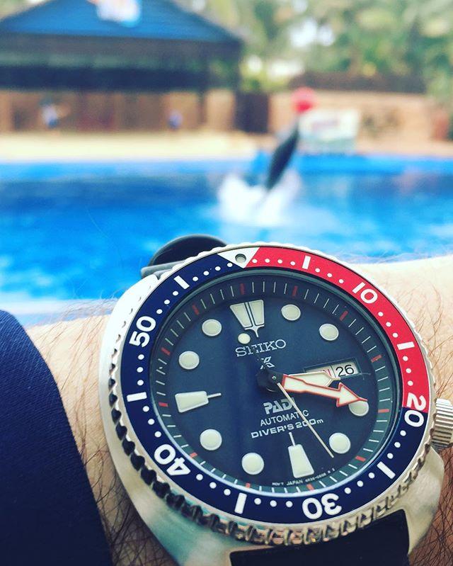 Turtle Vs Dolphin  The 1st #PADI #seikodiver #turtle 🐢 in @seikoireland 🇮🇪#srpa21 on vacation in sunny #SouthAfrica 🇿🇦 watching #dolphins 🐬at #ushakamarineworld #durban 🌴🏄😄 #6309 #Padi #Prospex #seiko #seikoturtle #seikopadi @seikowatchusa