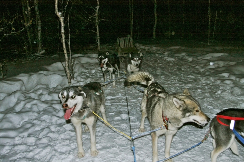 A few of the sled dogs!