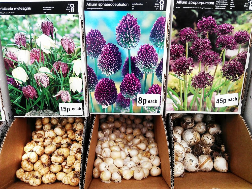 Spring bulbs now in!
