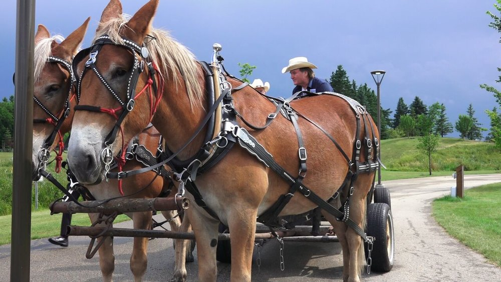 Blueberry Bluegrass Festival - Wagon Rides