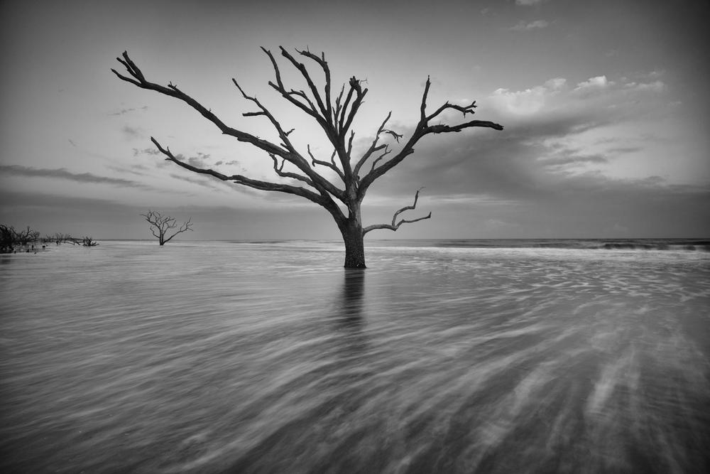 Gnarled Sentinel at Boneyard Beach, South Carolina