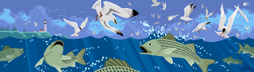 New England Fishing • This website banner illustrates a frenzy of birds and fish for a fishing blog. Private commission.