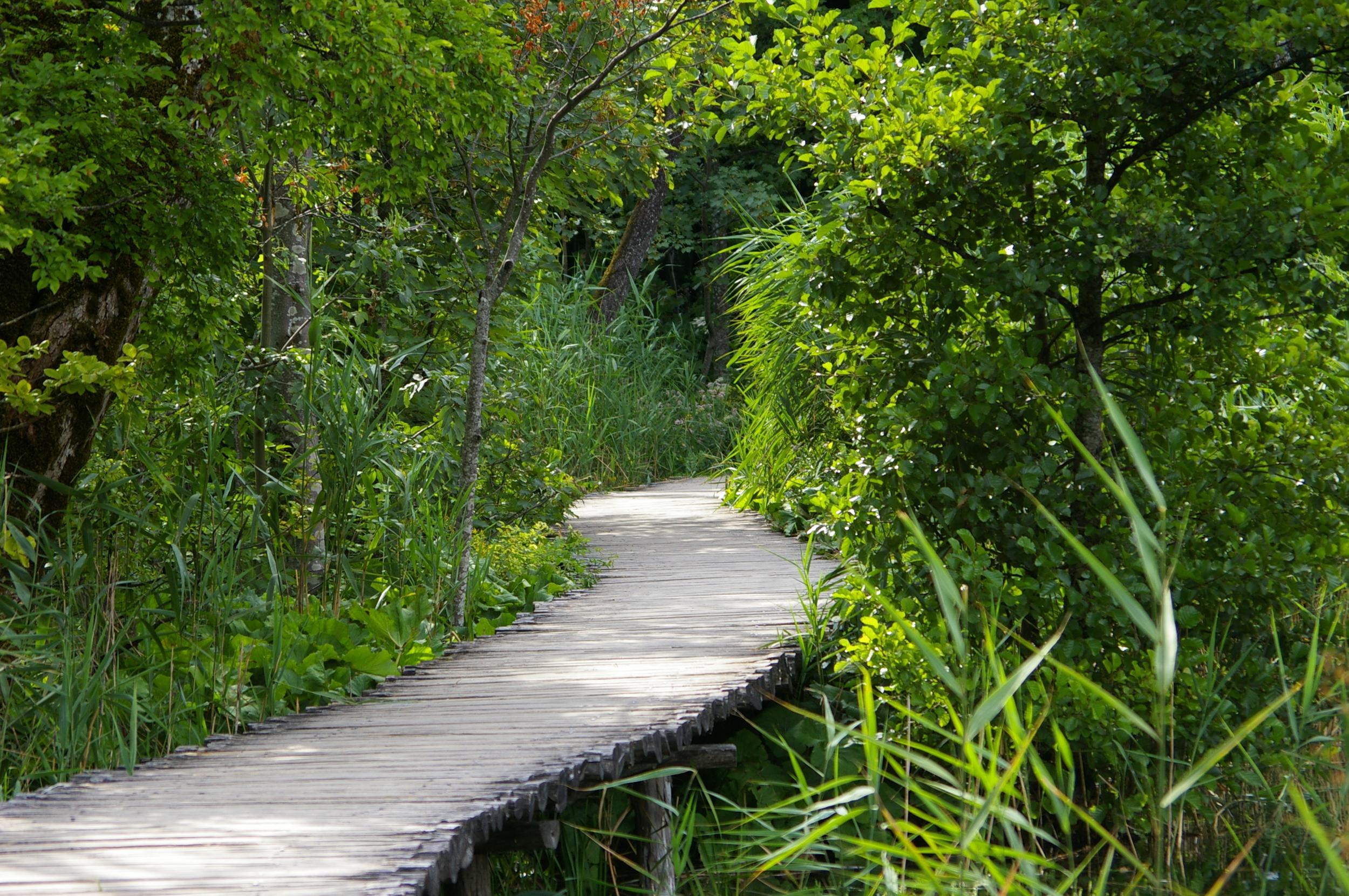 Memoriza el recorrido: las ideas y las conexiones. Foto: lbajorwppl (freeimages.com)