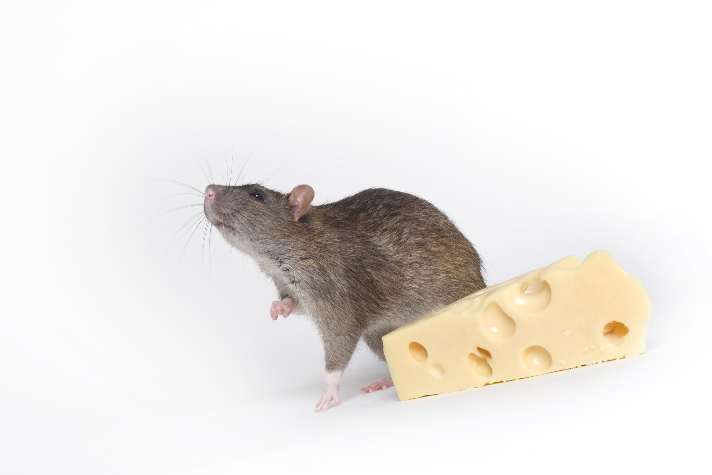 ¿Cuánto tiempo vas a tener el queso a mano? Imagen: http://www.liskina-nora.ru/