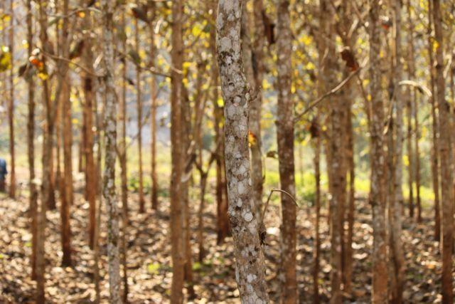 Trek trees.jpg