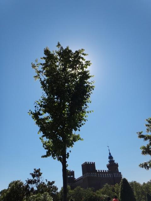 Tree silhouette.jpg