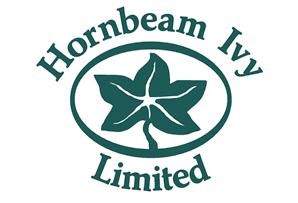 Hornbeam Ivy