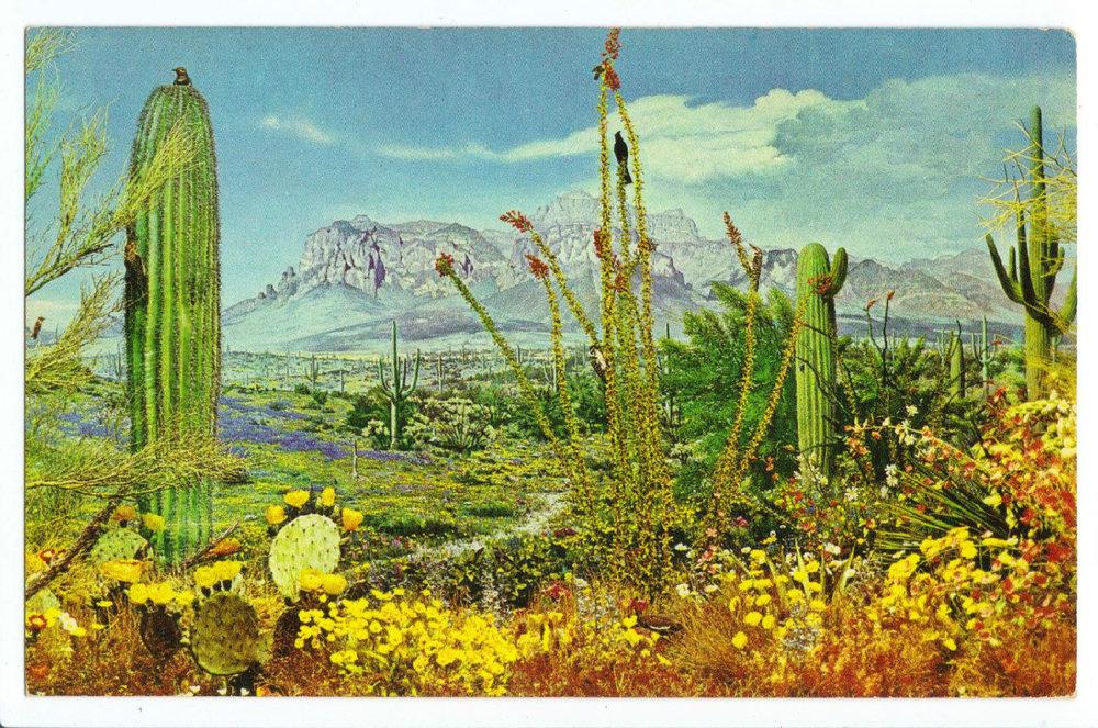 Strange Laws: Cacti in Arizona