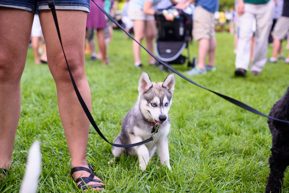 RobCannon-20160918-PupsAndPilsners-014.jpg