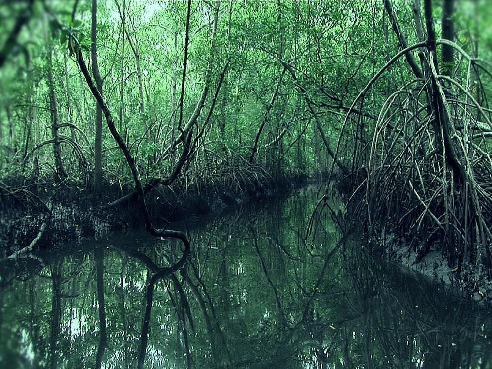 swamp canopy 2.jpg
