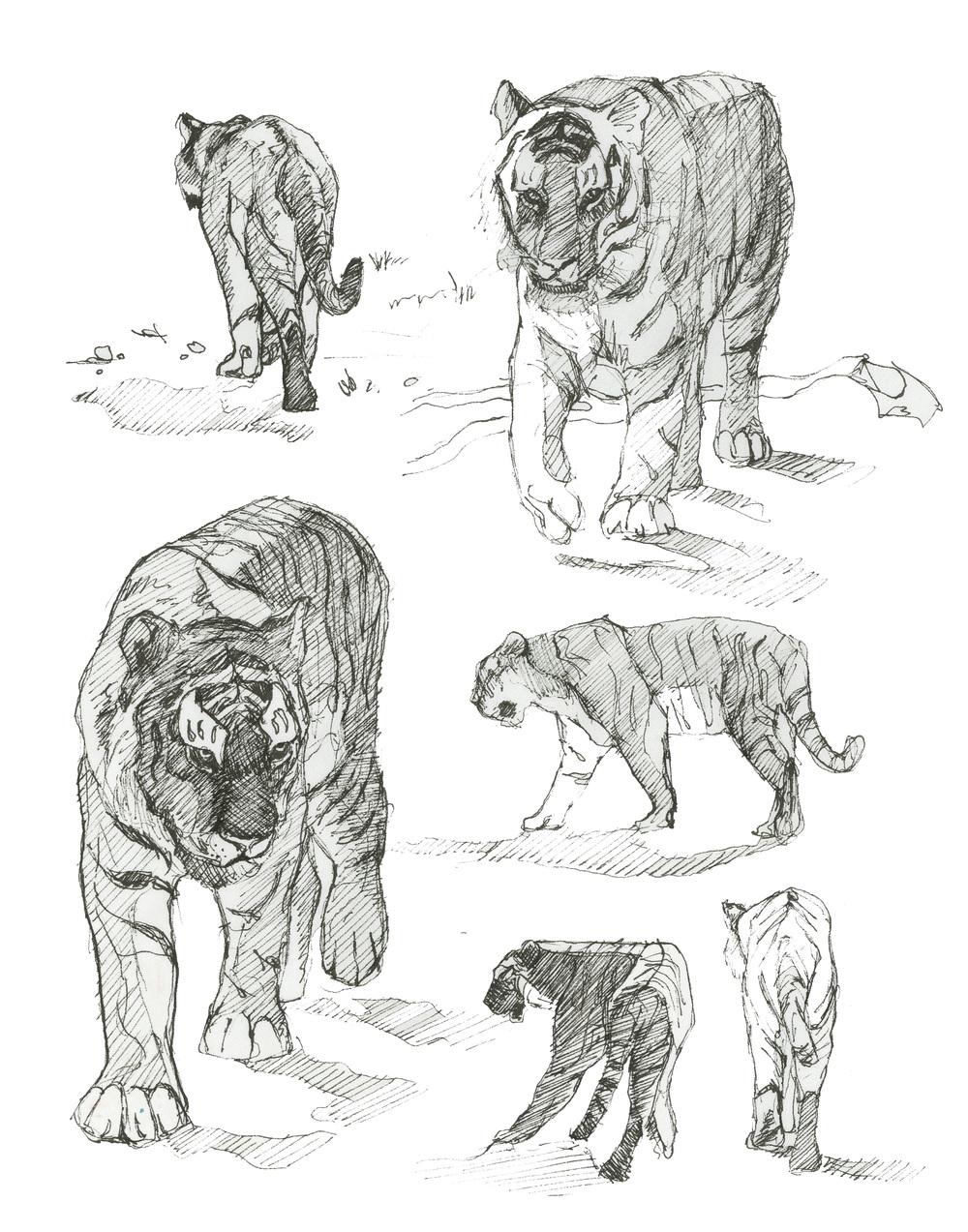 Tiger Studies.