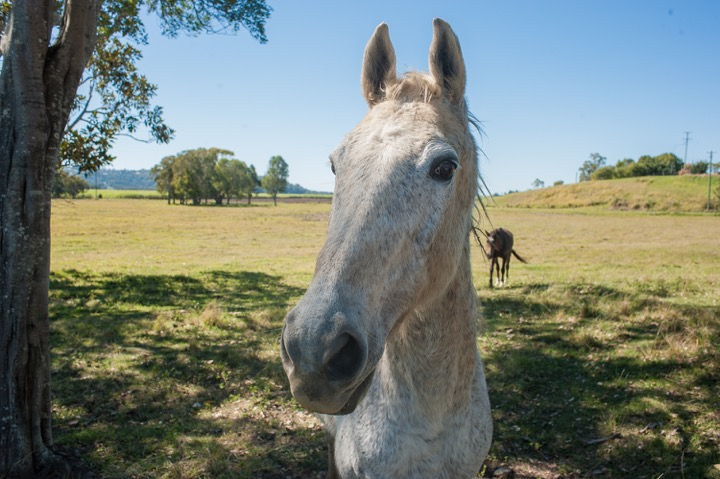 20170810-Trolleyd-Husk distillery horse.jpeg