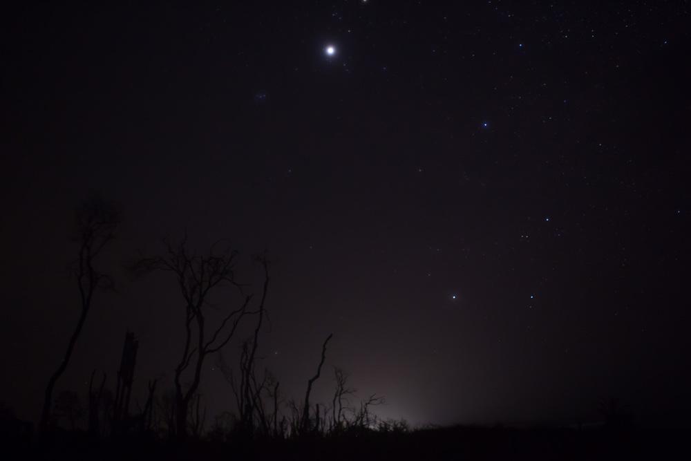 Stars-wooli.jpg
