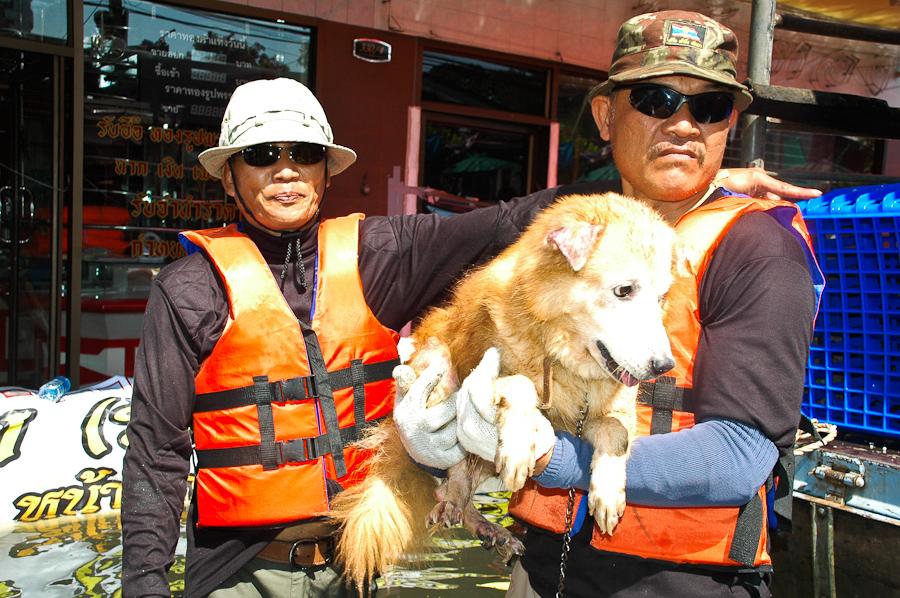 Pet Rescue: BKK