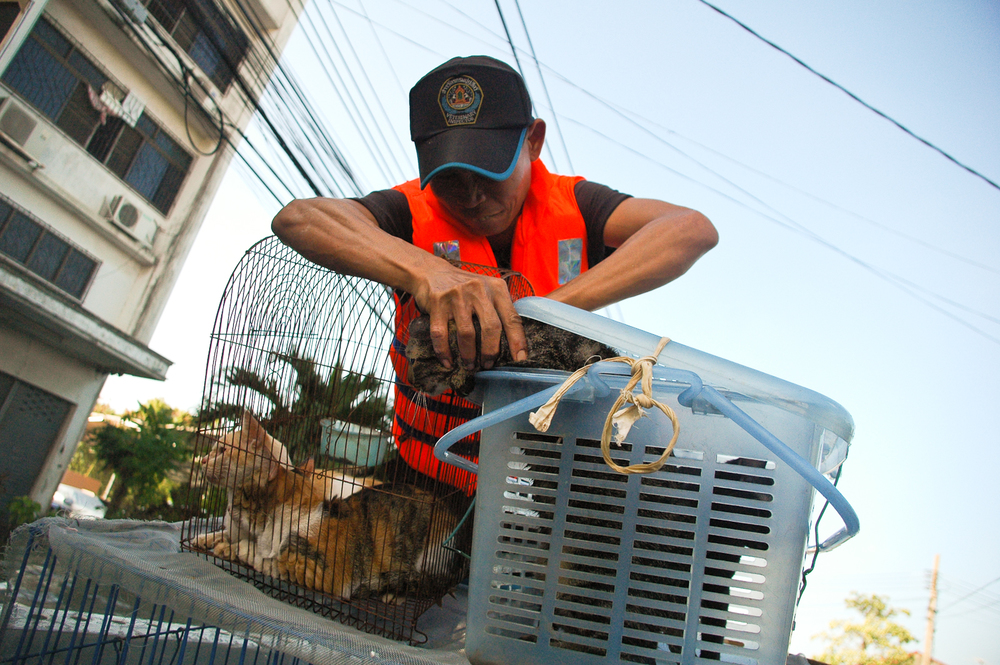 A volunteer tries to stop a rescued cat from escaping.