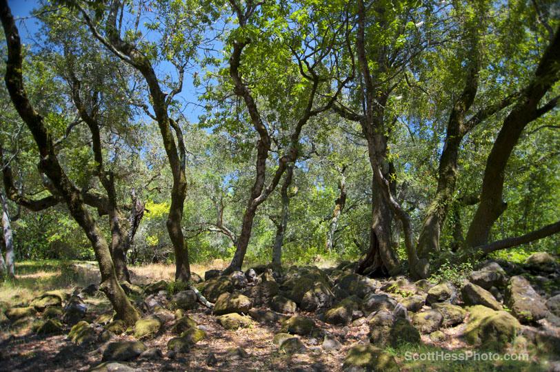 Marijke's Grove - Paradise Ridge-2.jpg