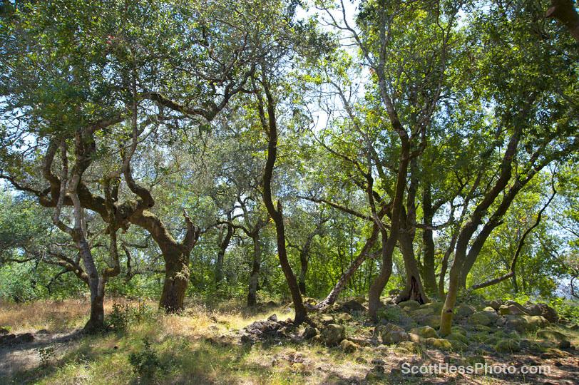 Marijke's Grove - Paradise Ridge-3.jpg
