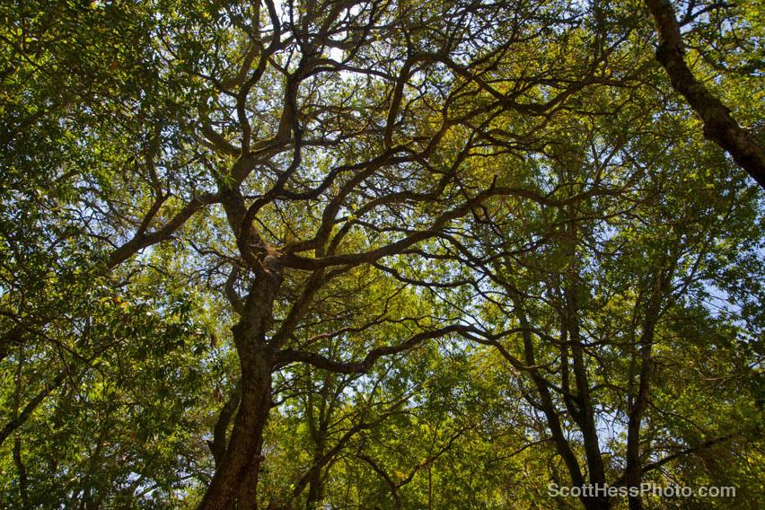Marijke's Grove - Paradise Ridge-1.jpg