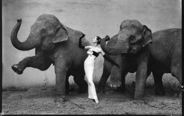 Richard Avedon's Dovima with elephants sold at auction for $1.2 million