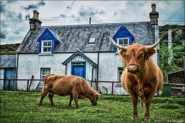The little hamlet of Duirnish, where Highland cattle freely wander the streets