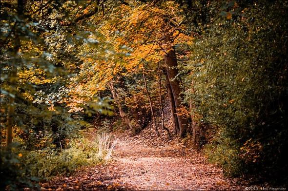 wpid19265-Bollin-Valley-in-Autumn-Neil_Alexander-01-590x392.jpg