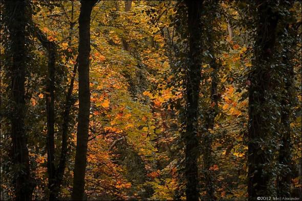 wpid19270-Bollin-Valley-in-Autumn-Neil_Alexander-03-590x392.jpg
