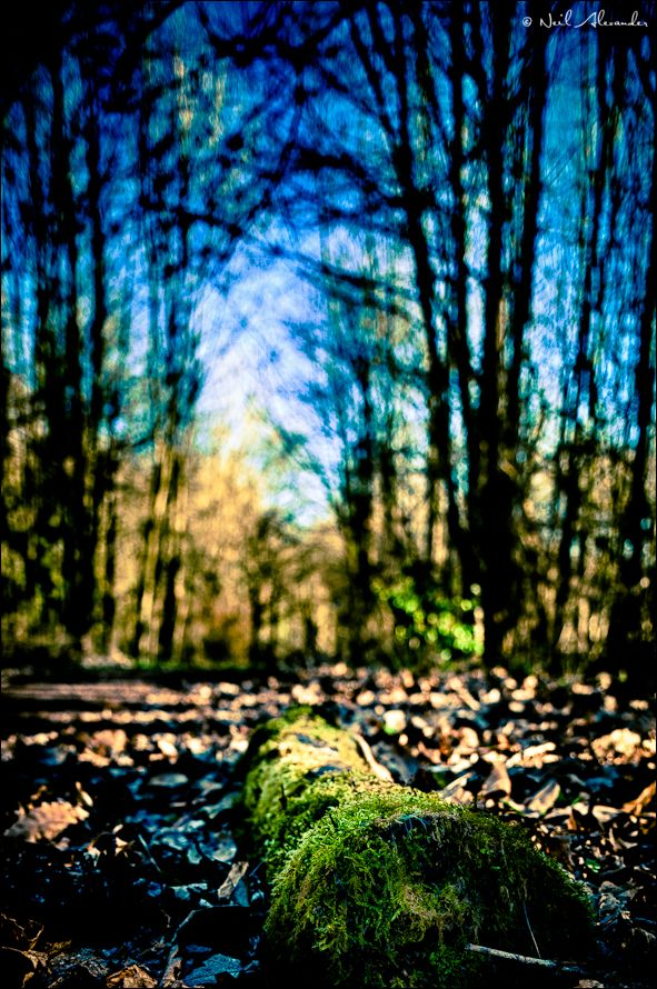 Mossy log by Neil Alexander (click for larger)