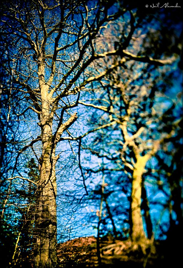 Bollin Valley trees by Neil Alexander (click for larger)