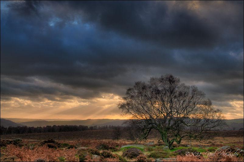 Tree in the Derwent Valley, High Peaks