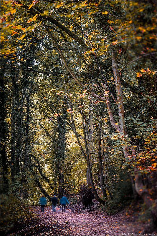 wpid19267-Bollin-Valley-in-Autumn-Neil_Alexander-02.jpg