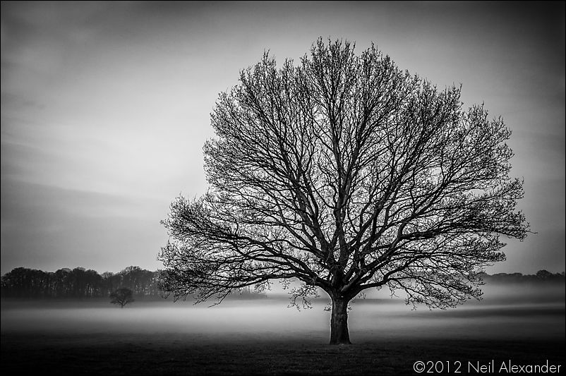 Misty tree - March