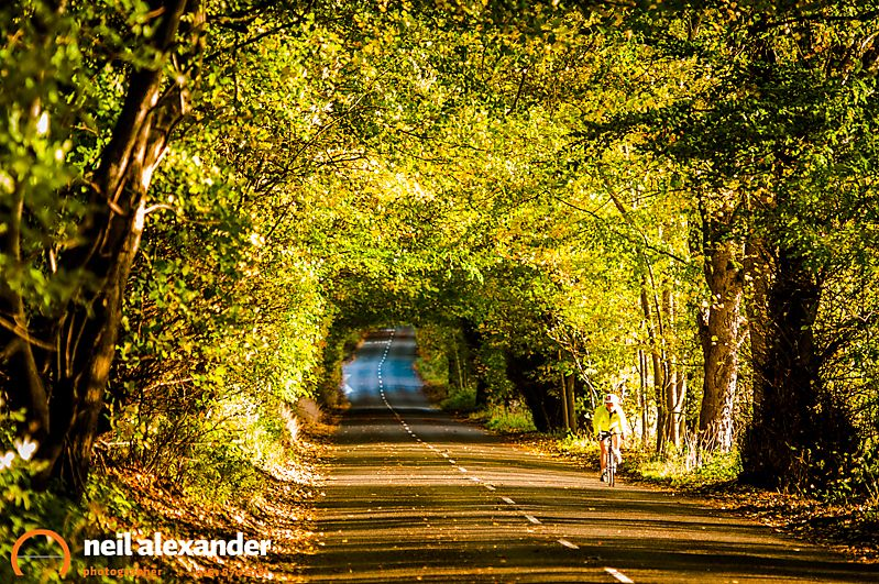 Leafy Autumn road scene in the Peak District with cyclist