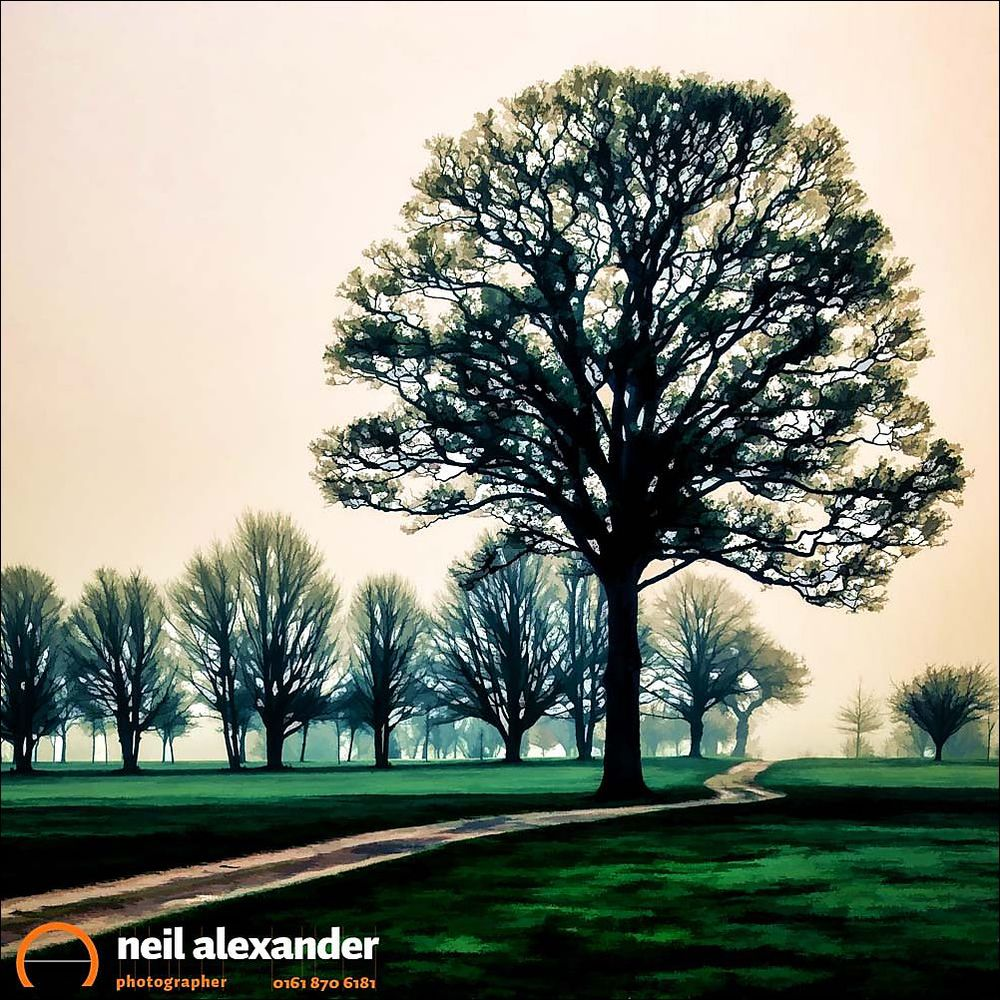 Tree at dawn on golf course, Hale Golf Course, Altrincham, Chesh