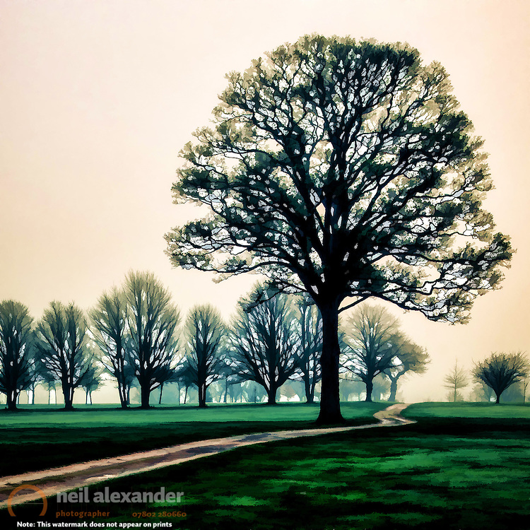 Tree at dawn on golf course, Hale Golf Course, Altrincham, Cheshire, England by Neil Alexander processed in Topaz Simplify