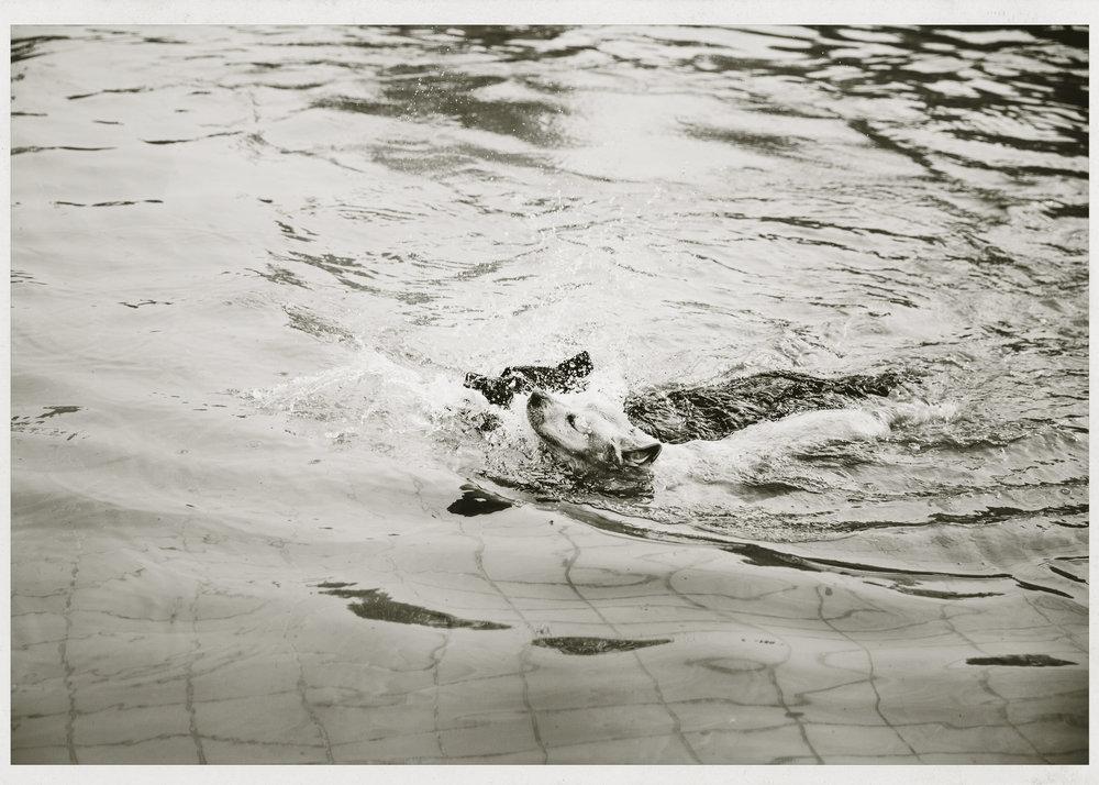 Hundeschwimmen_006.jpg