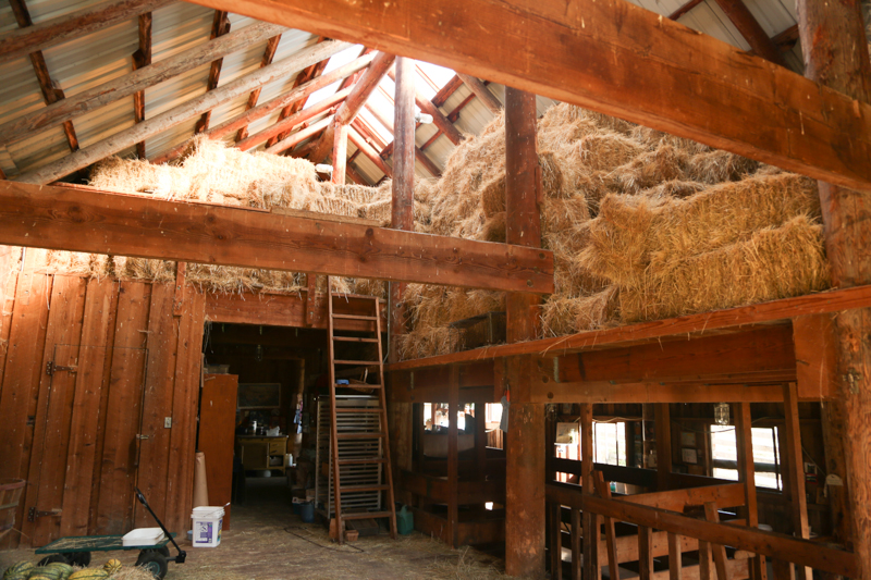 The hay loft was so beautiful and smelled so good.