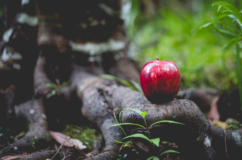 Snow White-15.jpg