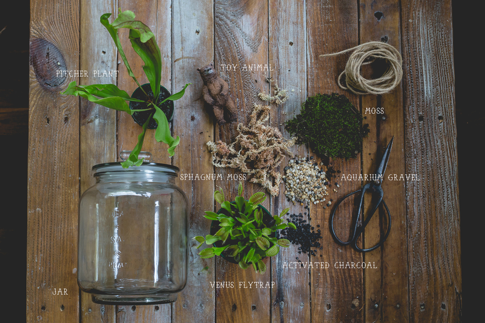 Diy Carnivorous Terrariums Blue Finch Photography