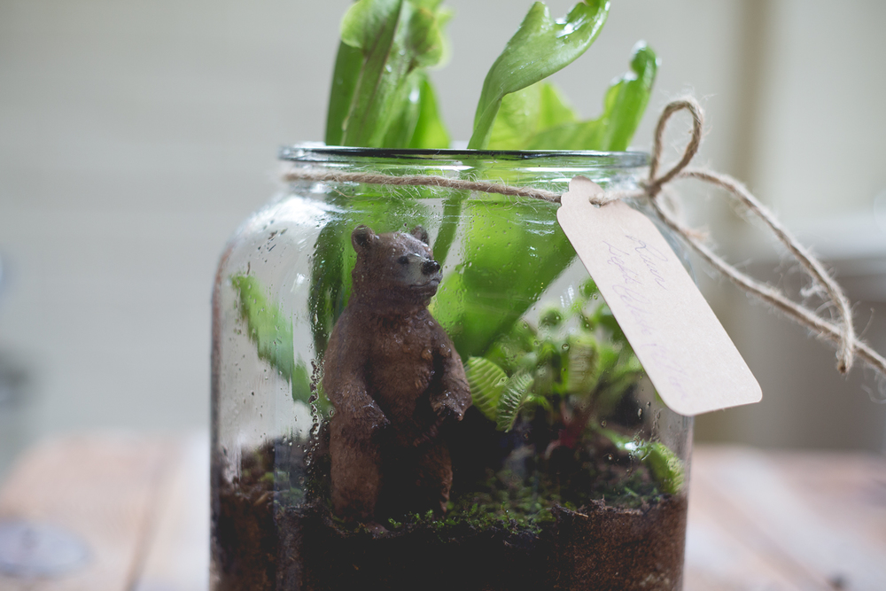 Terrariums take 2-22.jpg