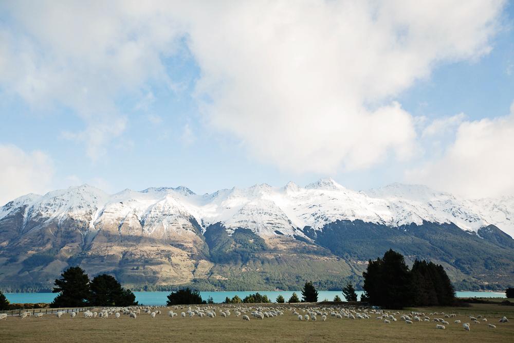 NZ LR-31.jpg