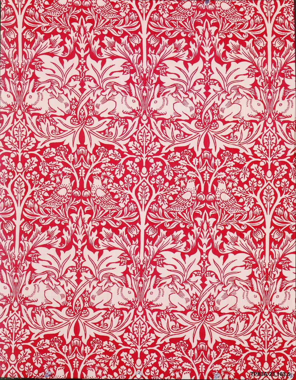 Brother Rabbit Wallpaper 1882