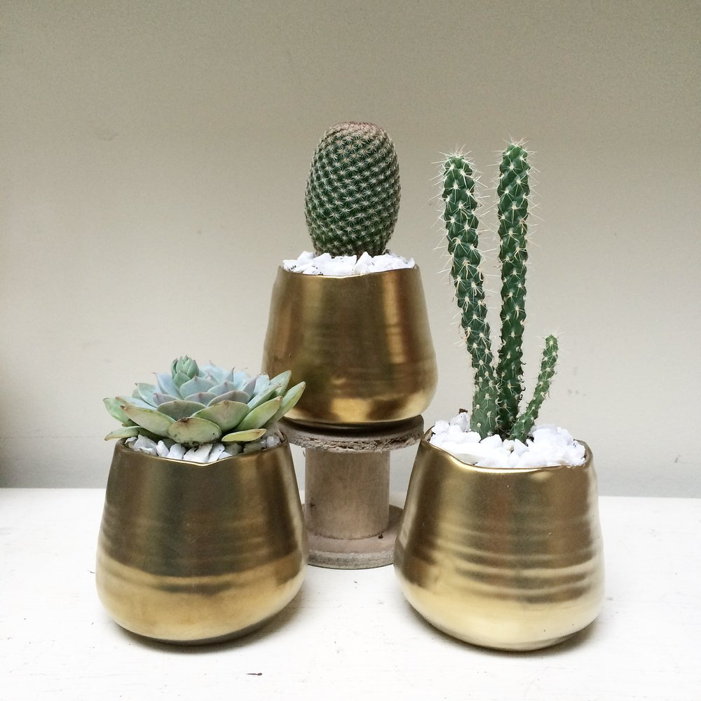 mini gold cacti pots.jpg