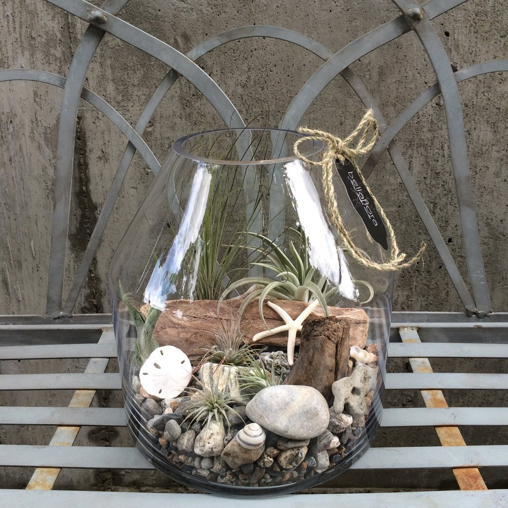 seaside airplant terrarium.jpg