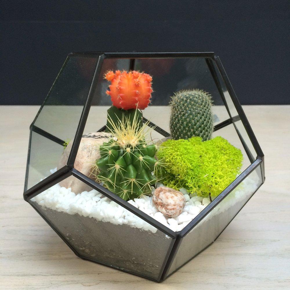 geometric cacti terrarium.jpg
