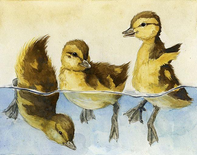 ducklingsswimmingsmall.jpg